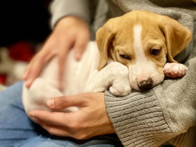 保護犬 里親 初めて 犬を飼う 条件設定 選ぶ 部屋
