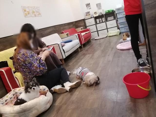 保護犬 里親 初めて 犬を飼う 契約 繁殖犬