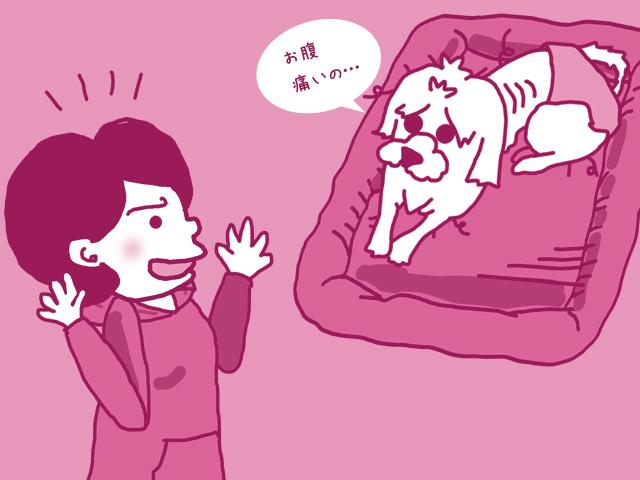 初めて 犬を飼う 部屋づくり 準備 動物病院