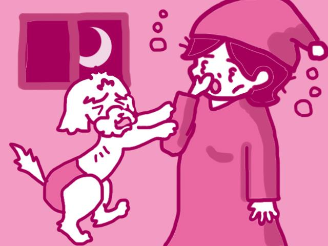初めて 犬を飼う 保護犬 室内 準備 寝る時 鳴く ケージ