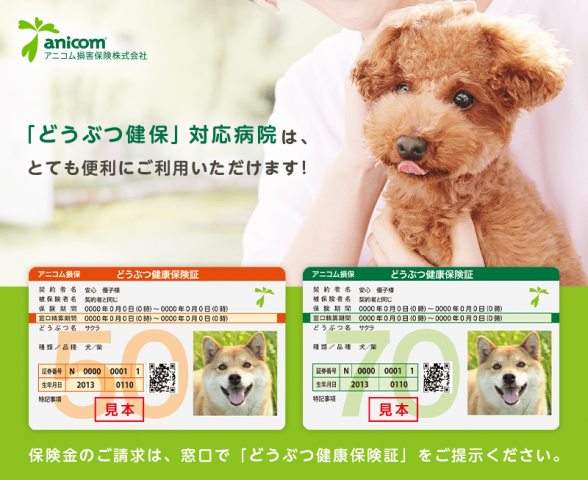 犬を飼う ペット保険 必要 人気 比較