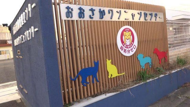 保護犬 大阪 譲渡会 場所 無料 費用 引き取り