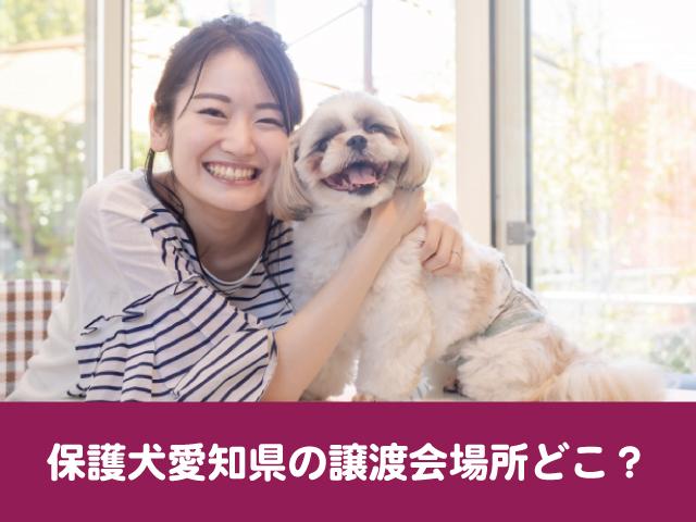 保護犬 愛知 譲渡会 場所 行き方 参加方法