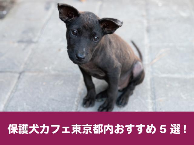 保護犬カフェ 東京都内 おすすめ 評判 口コミ