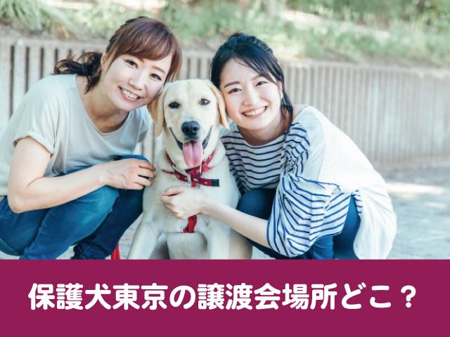 保護犬 東京都 譲渡会 条件 厳しい 引き取り