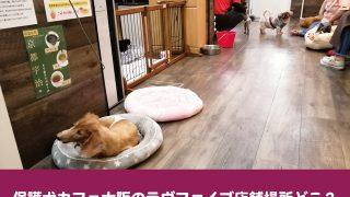保護犬カフェ 大阪 ラブファイブ 店舗 アクセス 駐車場