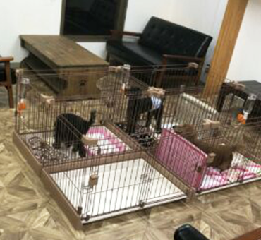 保護犬カフェ 大阪 引き取り 条件 料金