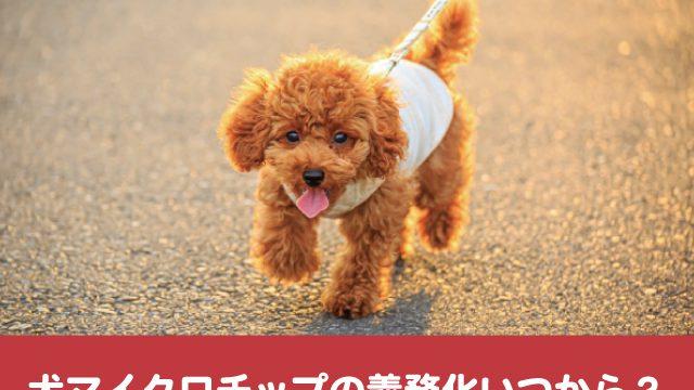 犬マイクロチップ 義務化 いつから 法律 何歳から 装着 入れたくない