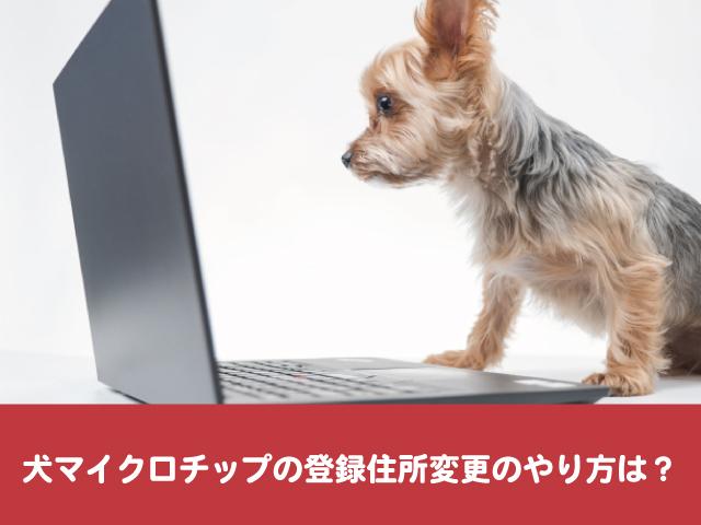 犬マイクロチップ 住所変更 登録 やり方 内容確認 名義変更 手続き 証明書