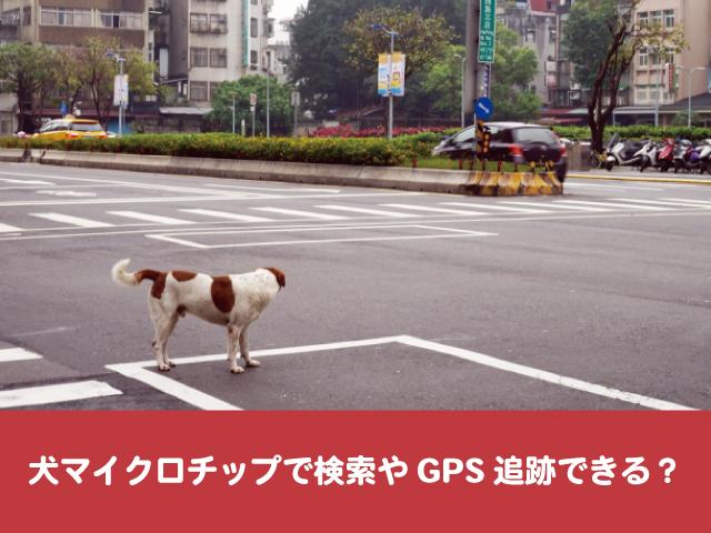 犬マイクロチップ 検索 GPS 探し方 紹介 迷子 居場所 追跡
