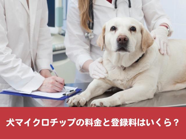 犬マイクロチップ 料金 登録 埋め込み メリット デメリット