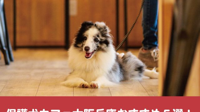 保護犬カフェ 大阪 兵庫 おすすめ 料金 評判 口コミ