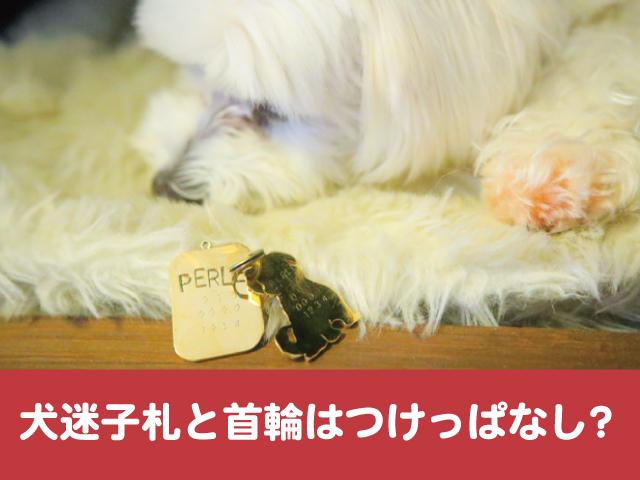 犬 迷子札 ネックレス 人気 おしゃれ かわいい デザイン 誕生石 ジュエリー