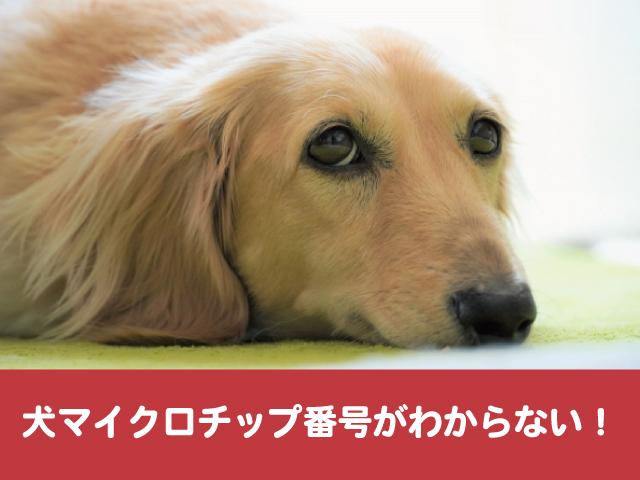 犬マイクロチップ 番号 分からない 会社変更 書き換え 上書き 更新
