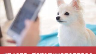 犬マイクロチップ 読み取り スマホ どこで 情報 照会